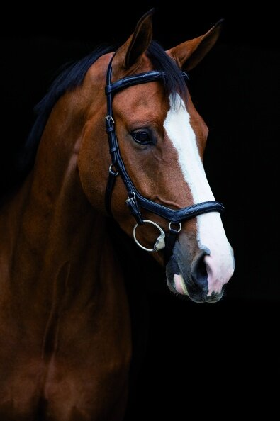 Horseware Rambo Micklem Deluxe Competition Trense