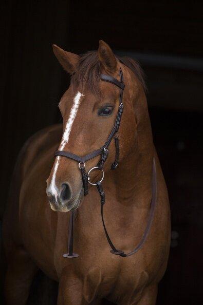 Leihgebühr für Horseware Micklem Competition Bridle Trense