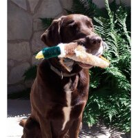 USG Country Dog Stockente