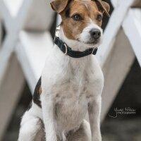 Kentucky Dogwear Hunde Halsband Corduroy green