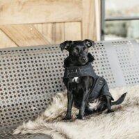 Kentucky Dogwear Hundemäntel black/black
