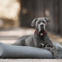 Kentucky Dogwear Hundebett Soft Sleep  grey