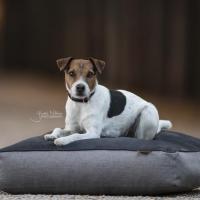 Kentucky Dogwear Hundebett Soft Pillow grey